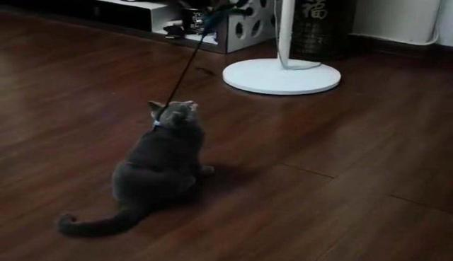 The cat's owner made a toy for the cat to play with for a lifetime. 1