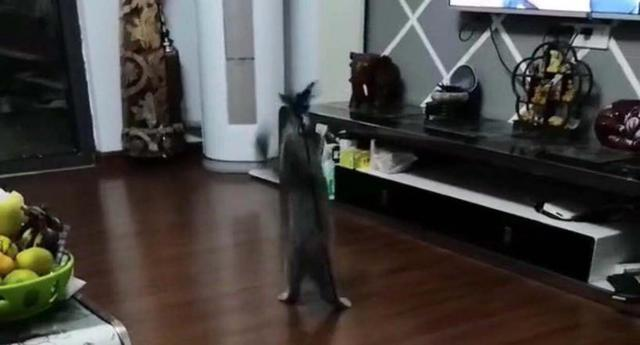 The cat's owner made a toy for the cat to play with for a lifetime. 4