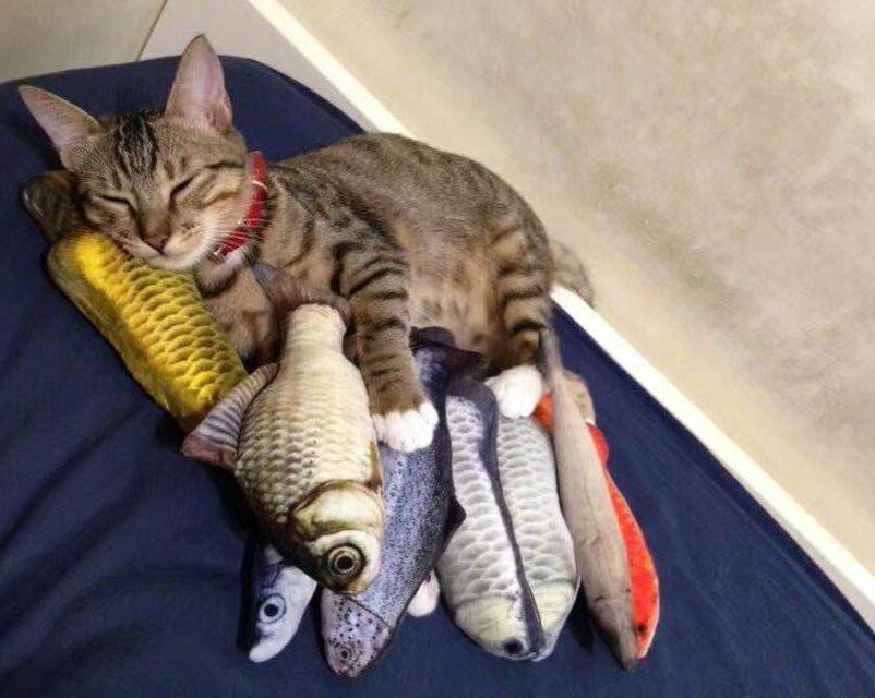 Since I bought these toys for cats, I feel like they don't need me anymore 4